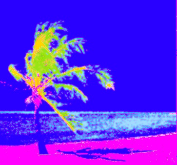 palm tree, shadow6